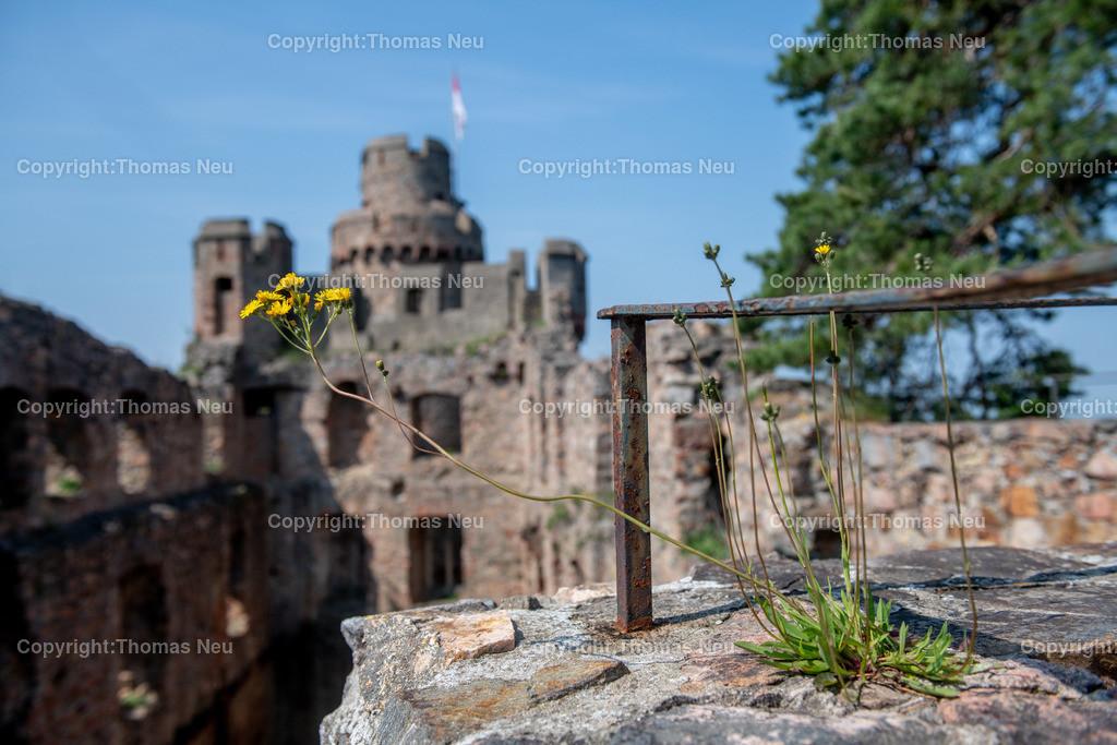 DSC_0090 | Bensheim, Auerbach, Schloss Auerbach, Burg, Mittelalter, Ruine, ,, Bild: Thomas Neu
