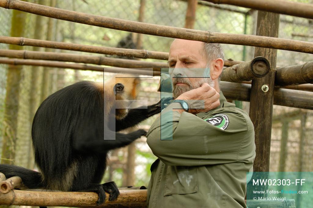 MW02303-FF   Vietnam   Provinz Ninh Binh   Reportage: Endangered Primate Rescue Center   Der Deutsche Tilo Nadler leitet das Rettungszentrum für gefährdete Primaten im Cuc-Phuong-Nationalpark. Projektleiter mit einem Cat-Ba-Languren im Käfig.  ** Feindaten bitte anfragen bei Mario Weigt Photography, info@asia-stories.com **