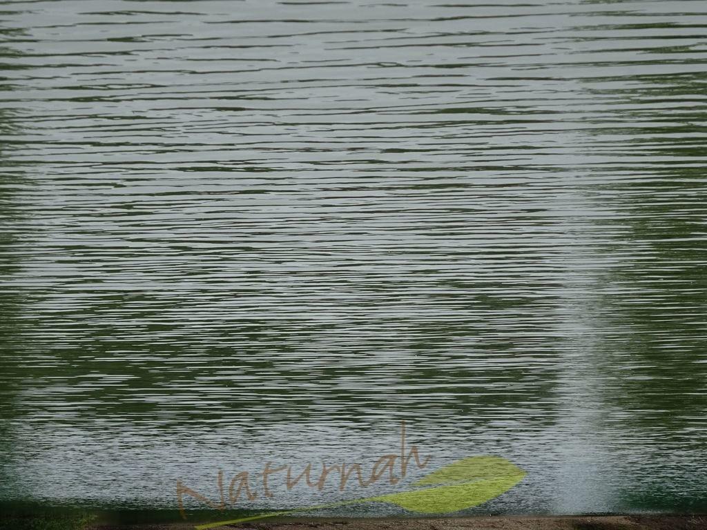 Wellentanz | Tanze mit den Wellen, horizontal und beschwingt.