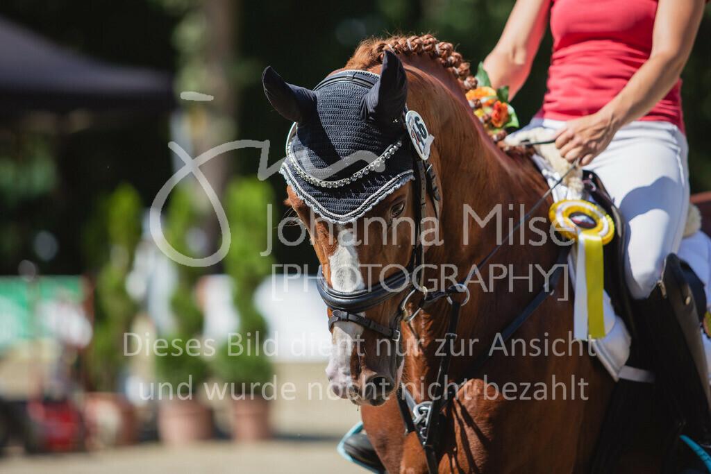 200819_Delbrück_Sprpf-A_2_1-272 | Delbrück Masters 2020 Springpferdeprüfung Kl. A** 4-6jährige Pferde