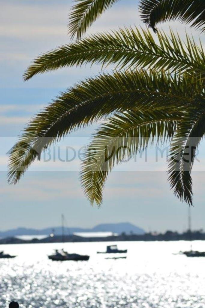 Bilder vom Meer | Palmen am Himmel über dem Meer