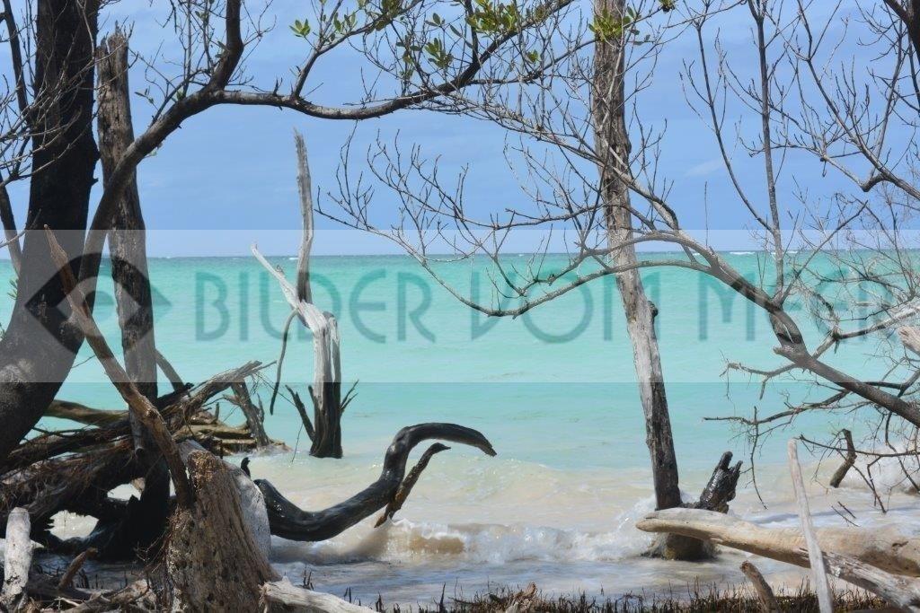 Strandbilder mit Holz, Sand und Meer   Bilder vom Meer in Kuba