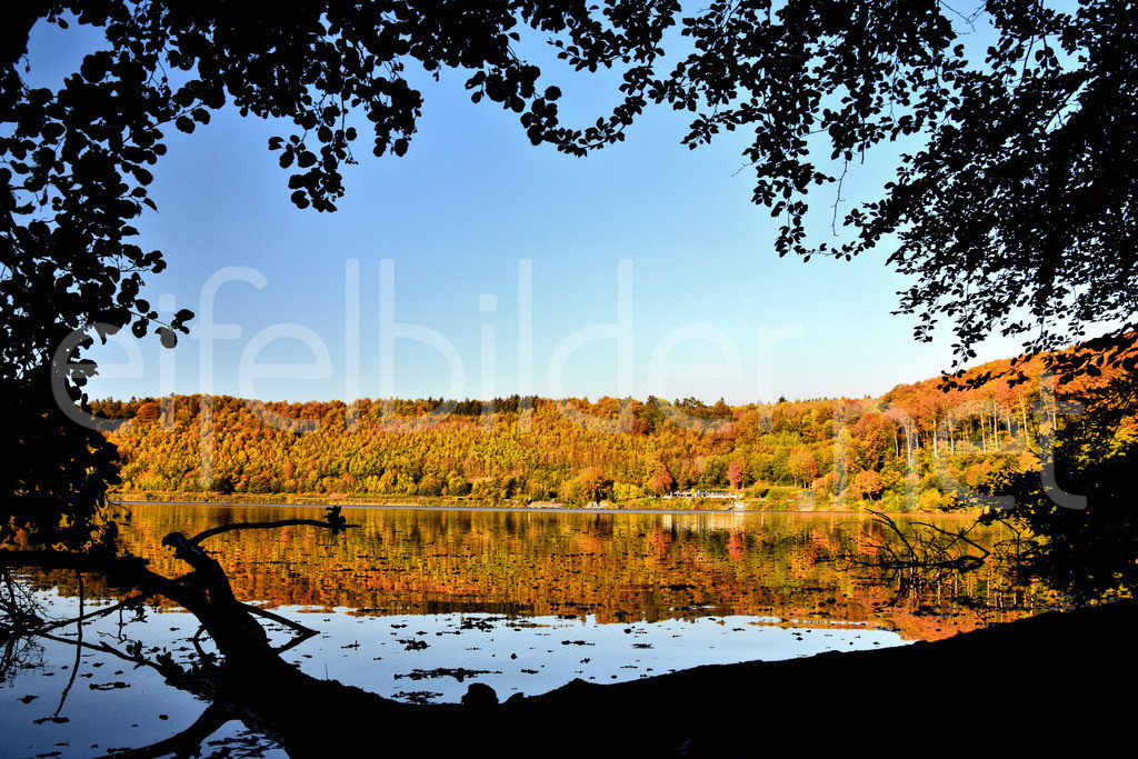 Herbst am Pulvermaar   Gillenfelder Maare, Gillenfeld, Eifel (Vulkaneifel)