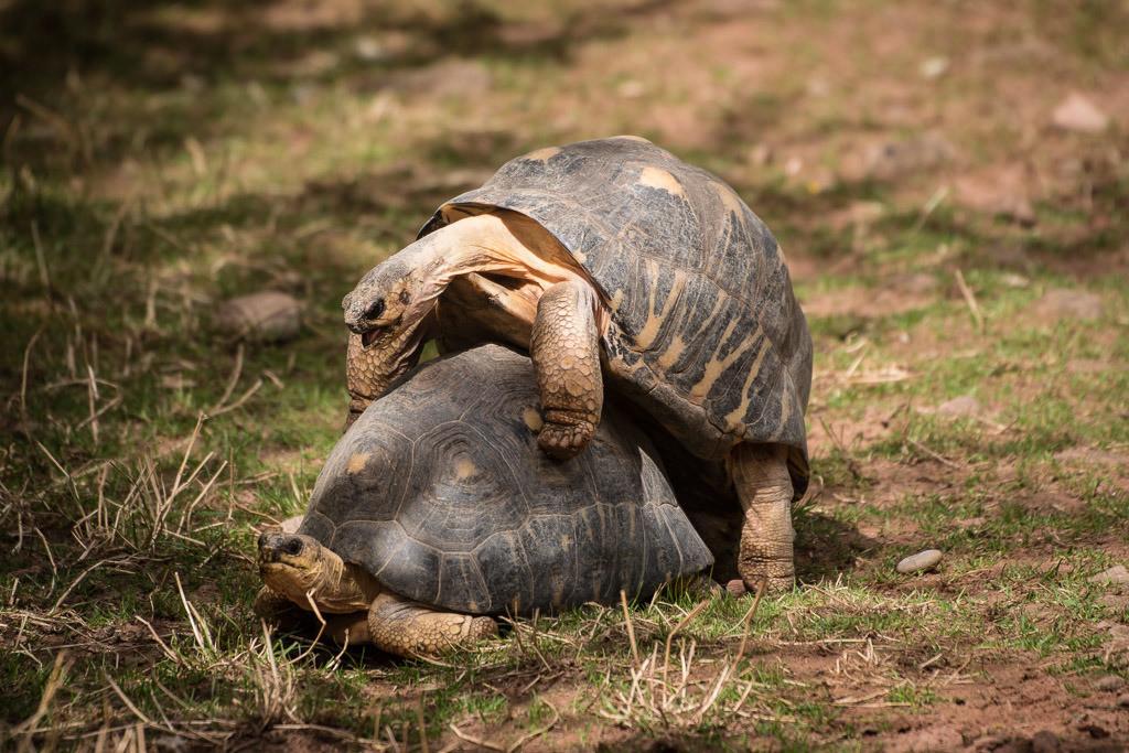 F*cking Turtles