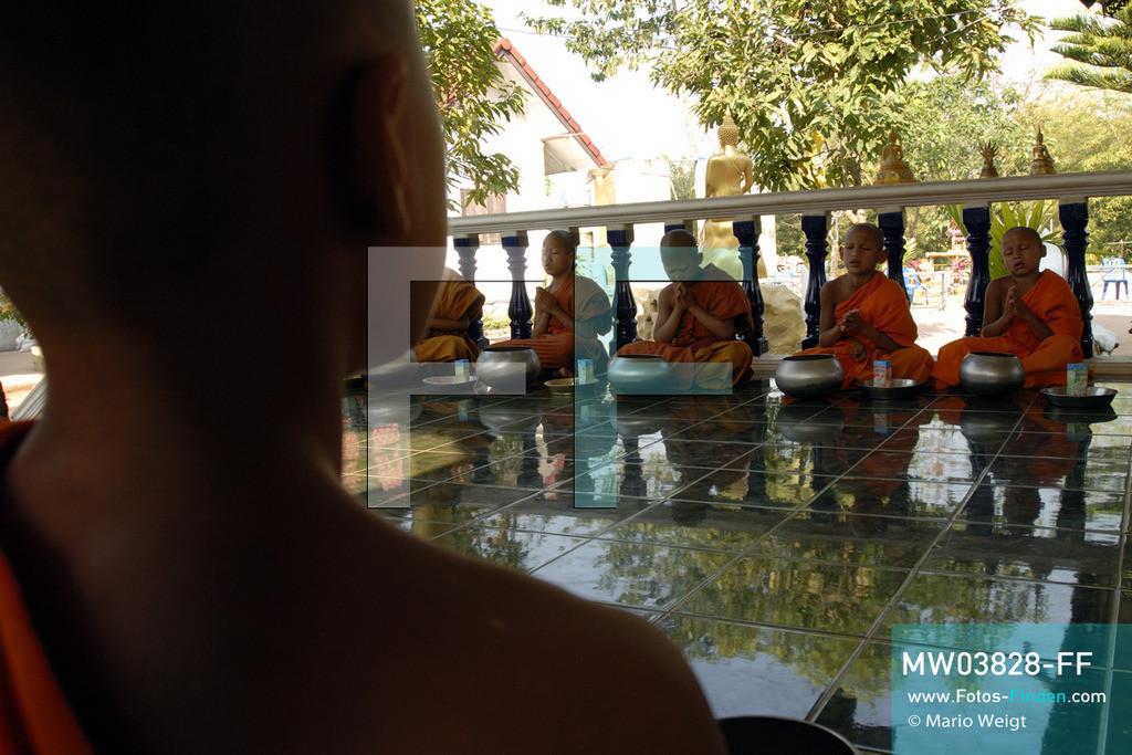 MW03828-FF | Thailand | Goldenes Dreieck | Reportage: Buddhas Ranch im Dschungel | Die jungen Mönche beim Gebet im Kloster  ** Feindaten bitte anfragen bei Mario Weigt Photography, info@asia-stories.com **