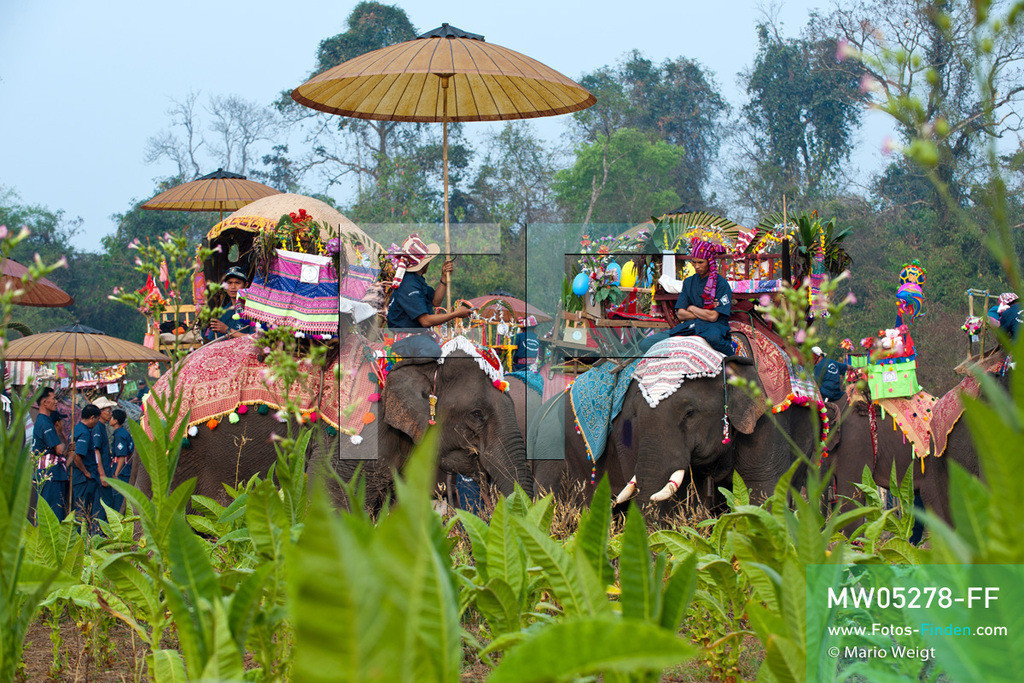 MW05278-FF | Laos | Provinz Sayaboury | Vieng Keo | Reportage: Pey Wan im Elefantendorf | Die Mahuts (Elefantenführer) warten mit ihren geschmückten Elefanten auf den Start der Prozession.  Der achtjährige Pey Wan lebt im Elefantendorf Vieng Keo im Nordwesten von Laos. Im Dorf wohnen ca. 500 Leute mit 17 Arbeitselefanten. Sein Vater Hom Peng hat einen 31 Jahre alten Elefantenbullen namens Boun Van, mit dem er im Holzfällercamp im Dschungel arbeitet. Zum Elefantenfest schmückt Pey Wan den Jumbo und darf mit ihm an der Prozession durchs Dorf teilnehmen. Pey Wan möchte, wie sein Vater, später auch Elefantenführer werden.   ** Feindaten bitte anfragen bei Mario Weigt Photography, info@asia-stories.com **