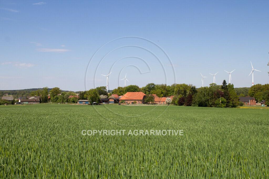 20130515-IMG_6654 | Gerste Bestand im Frühling - AGRARBILDER Bildagentur