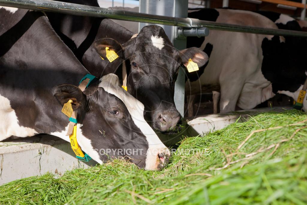 20110627-IMG_2981 | Milchkühe im Boxenlaufstall