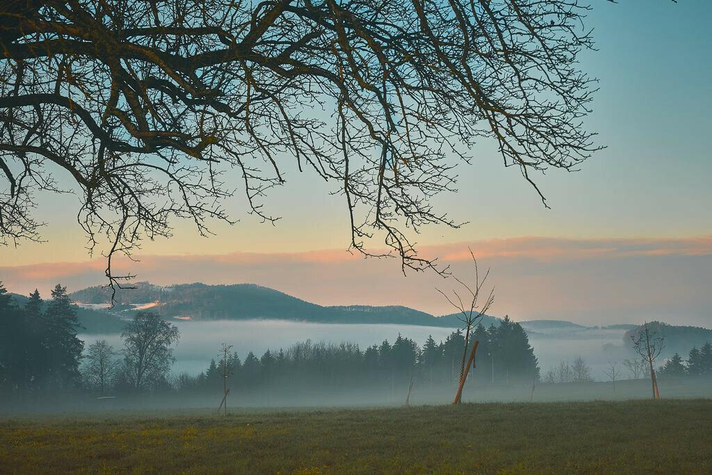 Nebel über Wängi 2 | 3