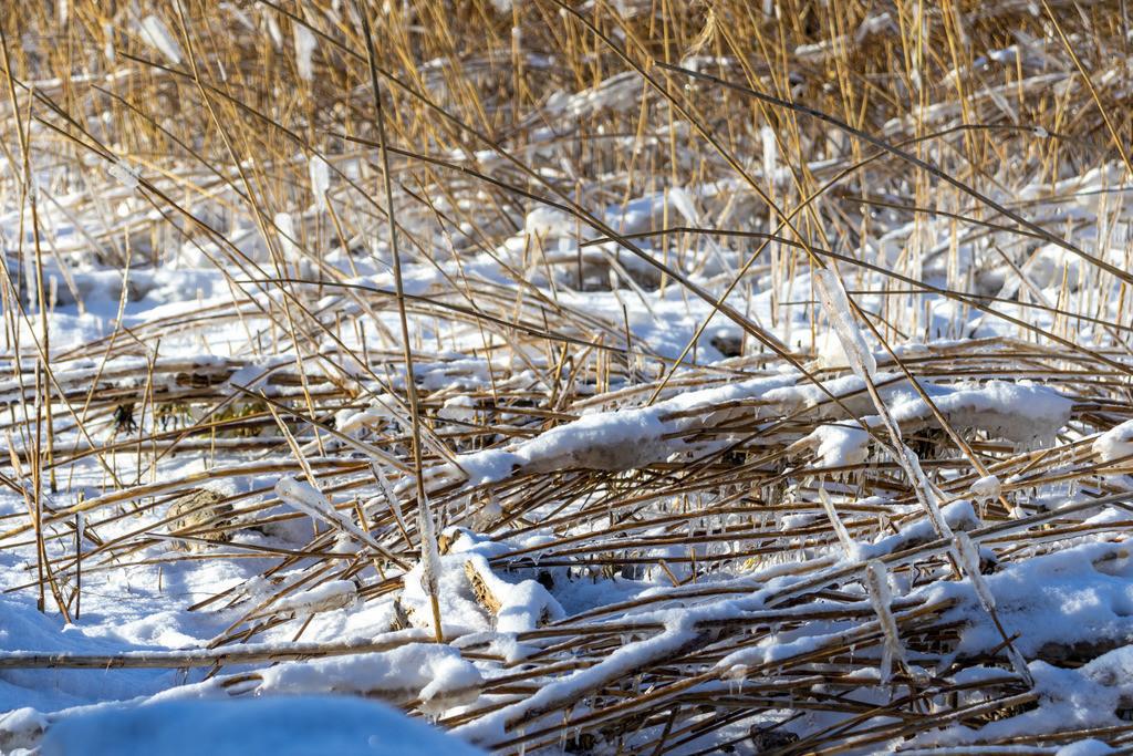 Sieseby an der Schlei | Eis und Schnee in Sieseby an der Schlei