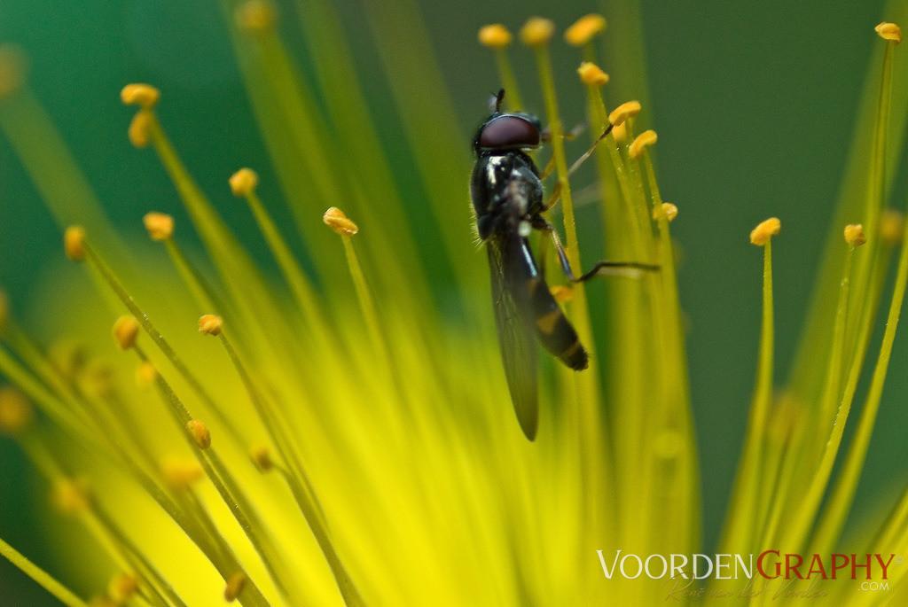 I love pollen (Teneriffa)