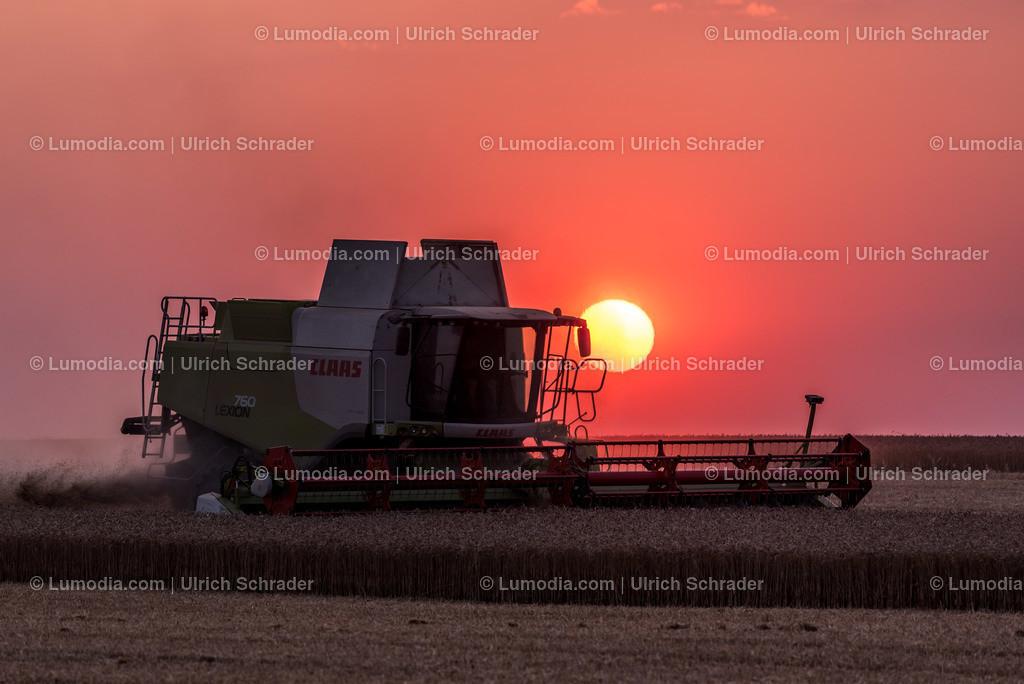 10049-10383 - Getreideernte bei Badersleben