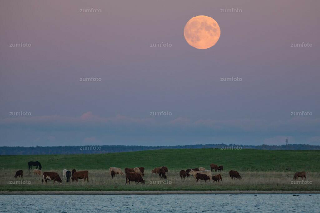0-131018_175918-5919 | --Dateigröße 4807 x 3205 Pixel-- Mondaufgang über dem Großen Schwerin