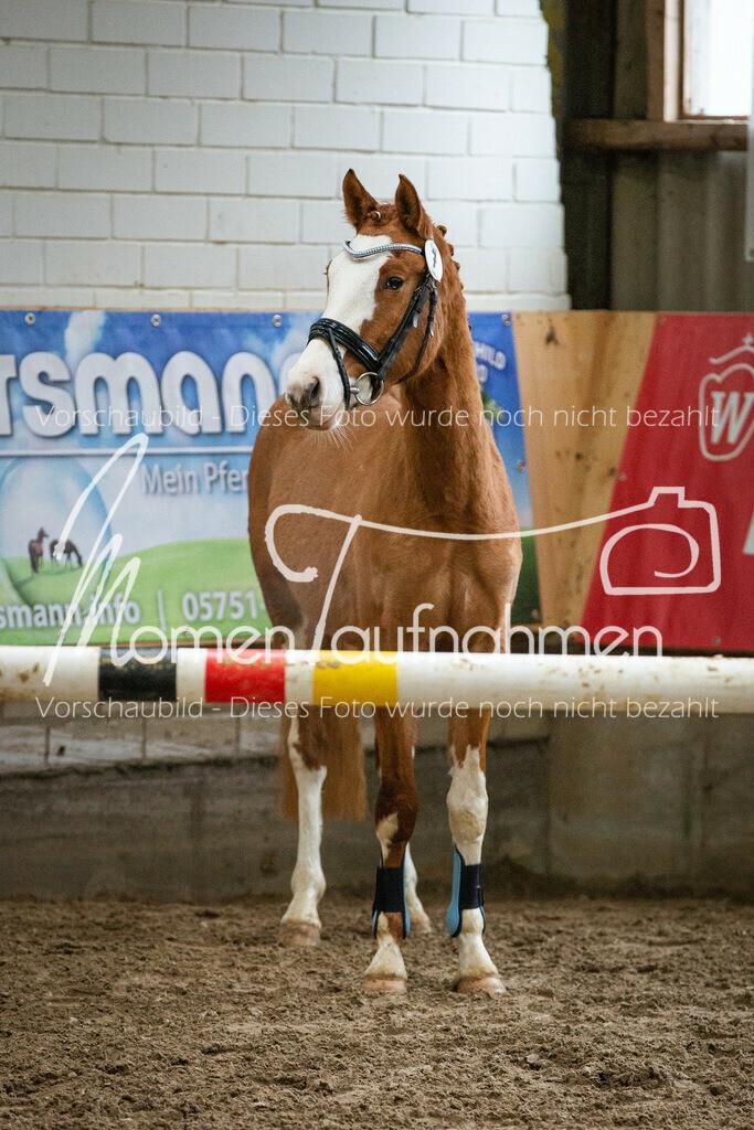 Freispringen-Pony-3j-39