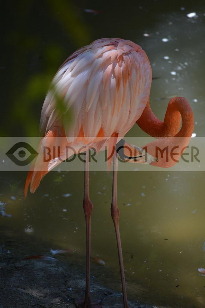 Flamingo Art Bilder | Rosa Flamingo Art Bilder