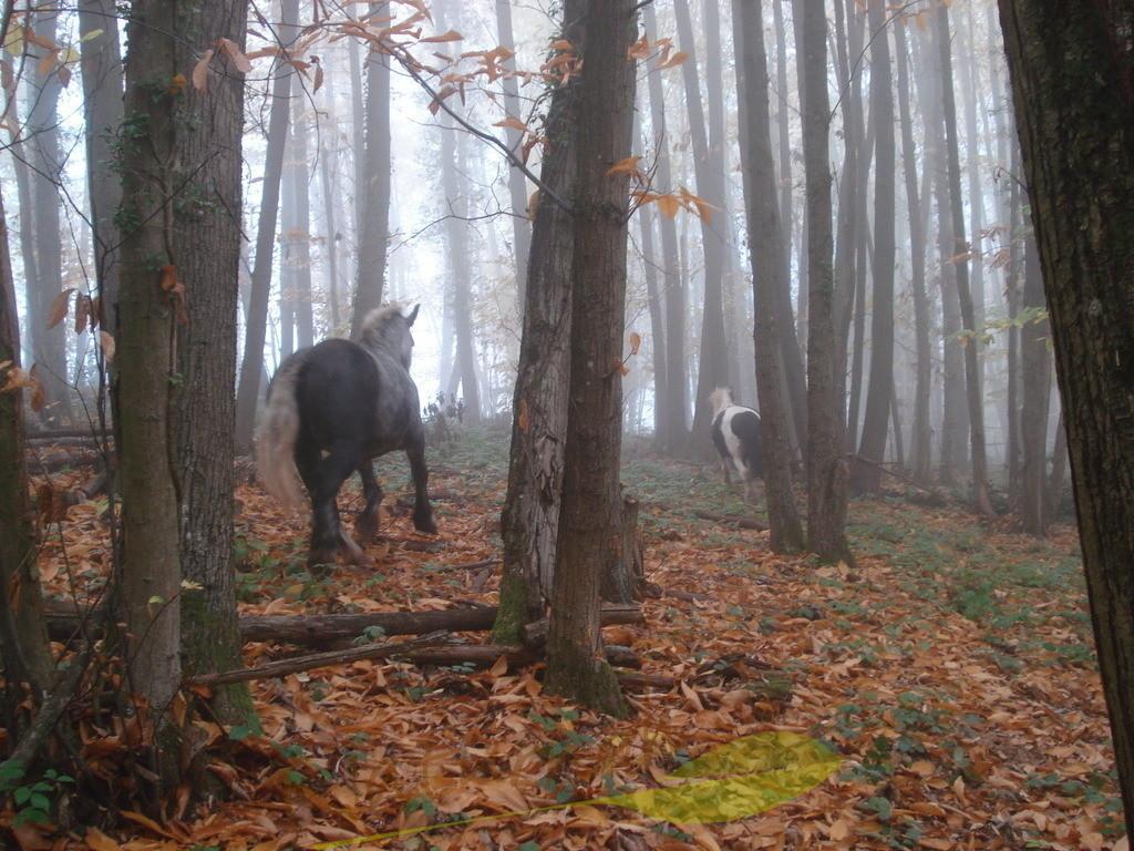 Waldpferde