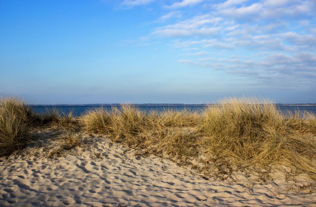 Strand in Noer  | Strandgras am Strand in Noer