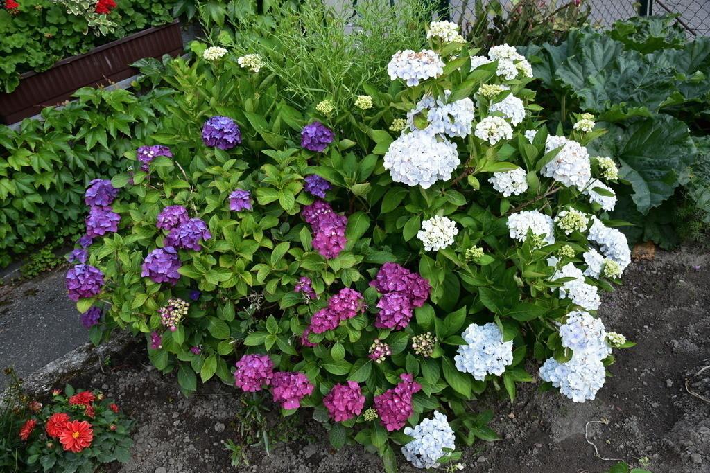 Blumen-25
