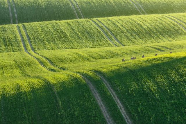 Grüne Welle | Grüne Wellen gibt es nicht nur im Autoverkehr. Dazu muss man nur im Frühling leicht hügeliges, landwirtschaftliches Nutzgebiet aufsuchen.