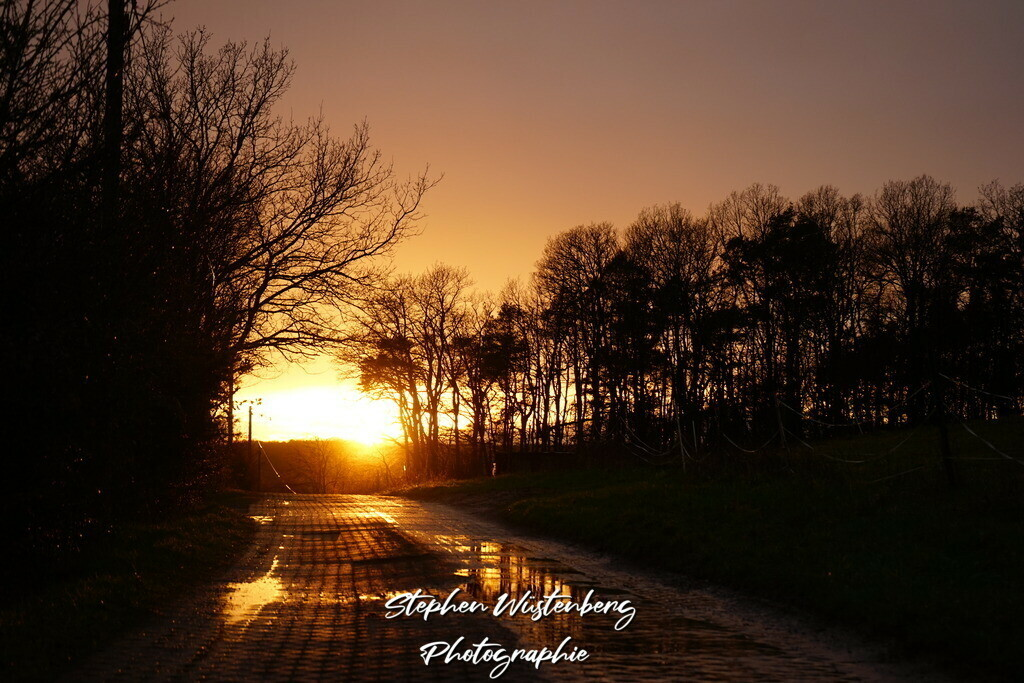 Sunset Burgweg Waroba | Sonnenuntergang auf dem Burgweg Wartenberg-Rohrbach Waroba mit in Pfützen reflektierenden Bäumen
