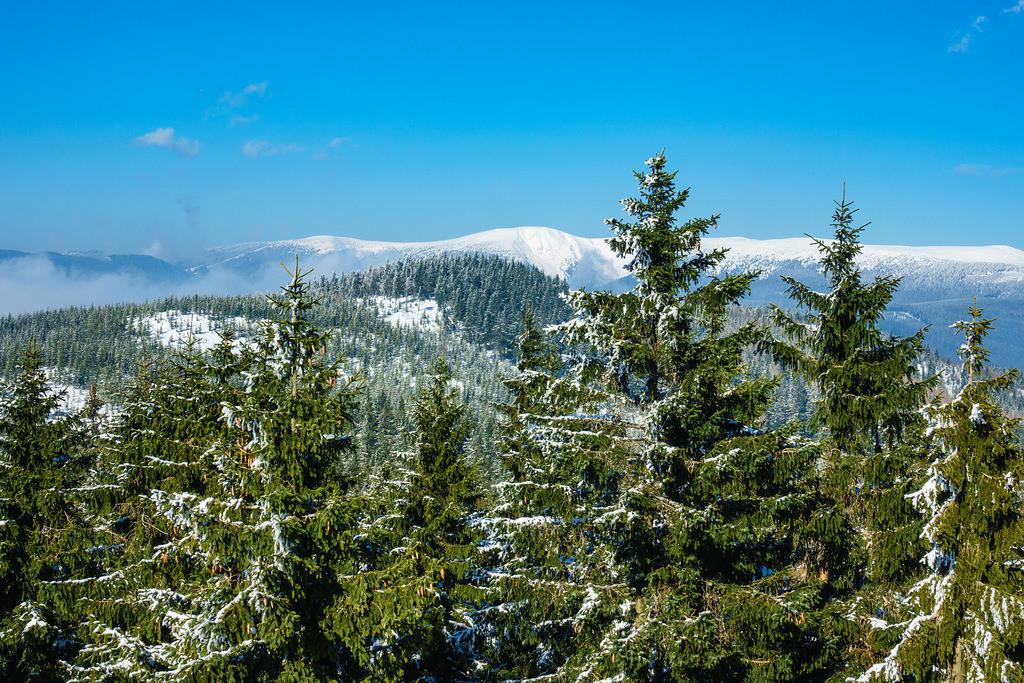 Winter im Riesengebirge bei Benecko, Tschechien   Winter im Riesengebirge bei Benecko, Tschechien.