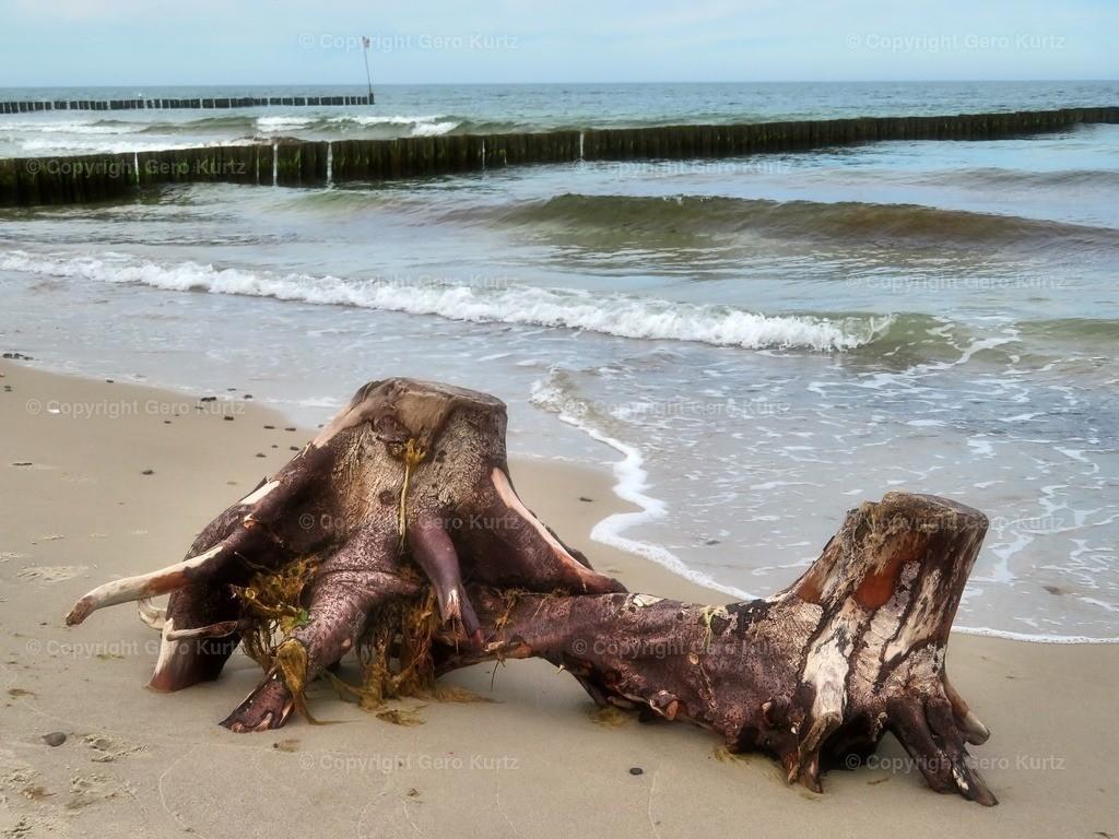 Zwei sich mögende Wurzeln | zwei interessante Wurzeln nach einem Sturm am Strand