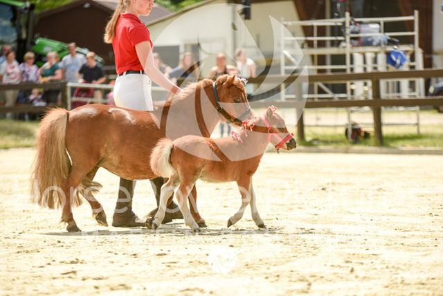 RFV Ochtrup - Fohlenparade-0970