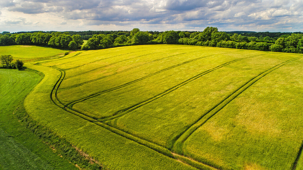 Gerstenfeld im Sonnenlicht | Gerstenfeld mit Traktorspuren bei Neritz, Stormarn