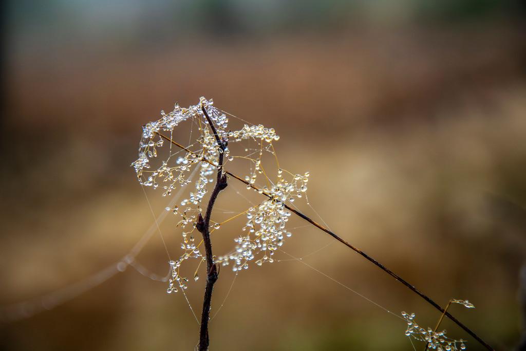 JT-181107-054    Herbst, Nebel, Landschaft, Wald, in der Nähe von Jagdhaus, Wassertropfen, Tau, auf kleinen Spinnennetzen, Schmallenberg, Sauerland, NRW, Deutschland, Europa.
