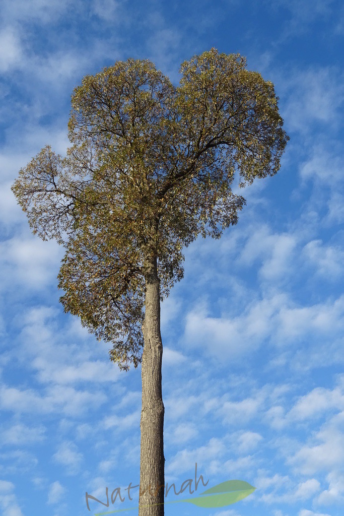 Klosterbaum im Herbstgewand