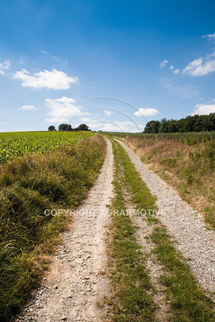 20090613-IMG_3184 | Symbolbild Zukunft - AGRARMOTIVE Bilder aus der Landwirtschaft