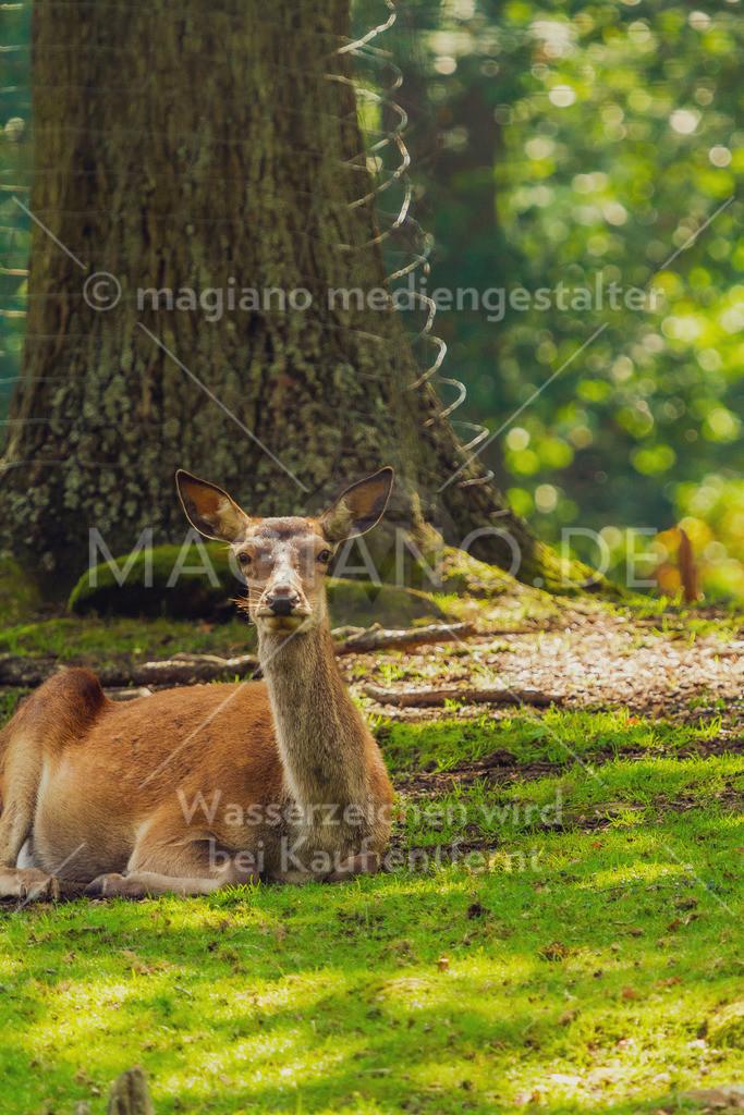 Wildpark-Kaiserslautern_20210918_0956