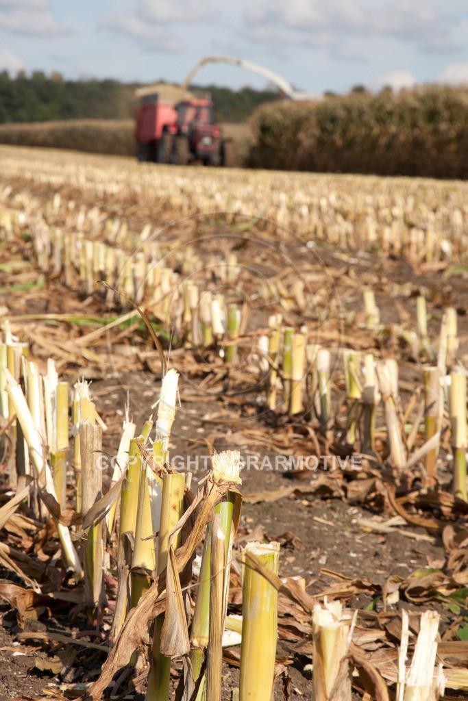 20080914-IMG_8971 | Silomais wird gehäckselt - AGRARFOTO Bilder aus der Landwirtschaft