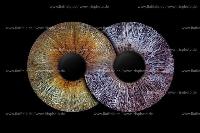 Iris-foto-Beispiel-545