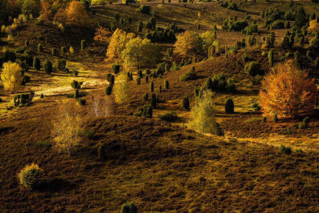 Goldener Totengrund | Der