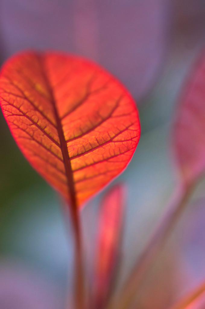 Best. Nr. BäumeGrün11 | Herbstlaub