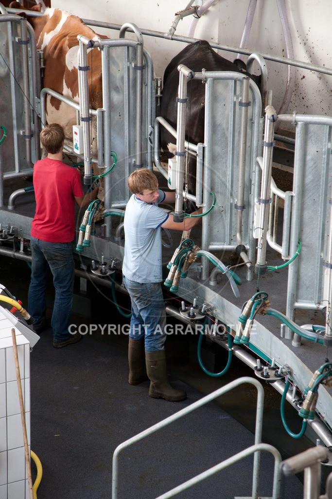20100821-IMG_0359 | Milchkühe im Melkkarussell - AGRARMOTIVE