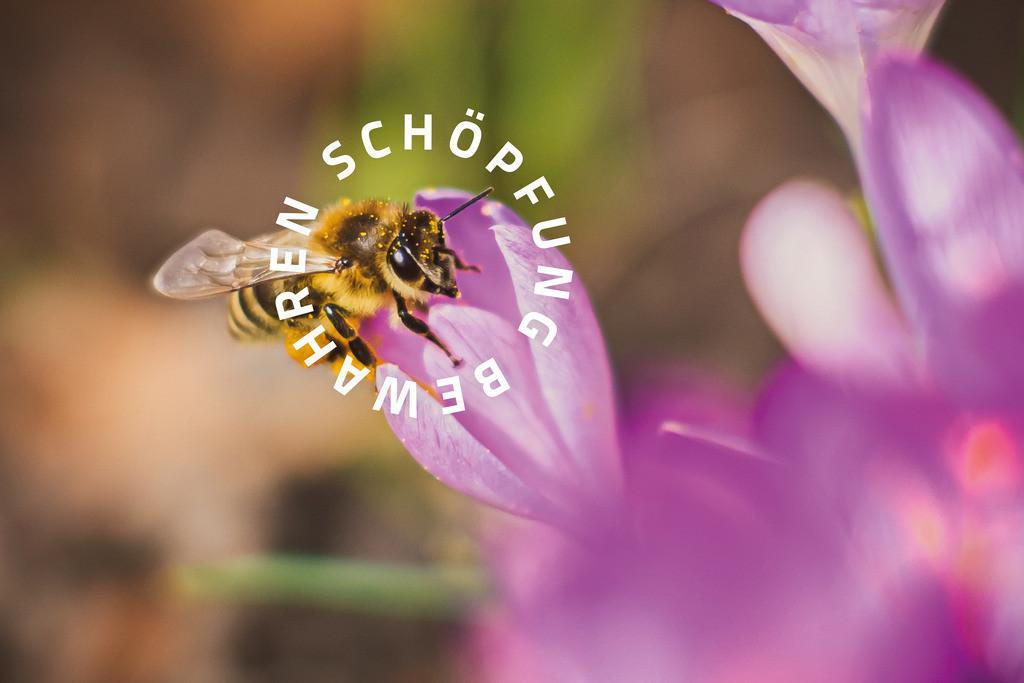 Schöpfung bewahren 05 Motiv Biene