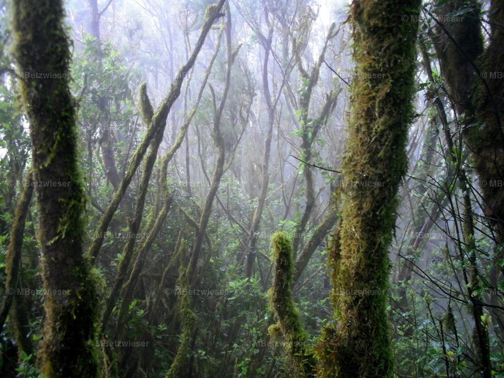 DSCF0027-4 | Ein Dunstschleier am Morgen im Cedro-Wald