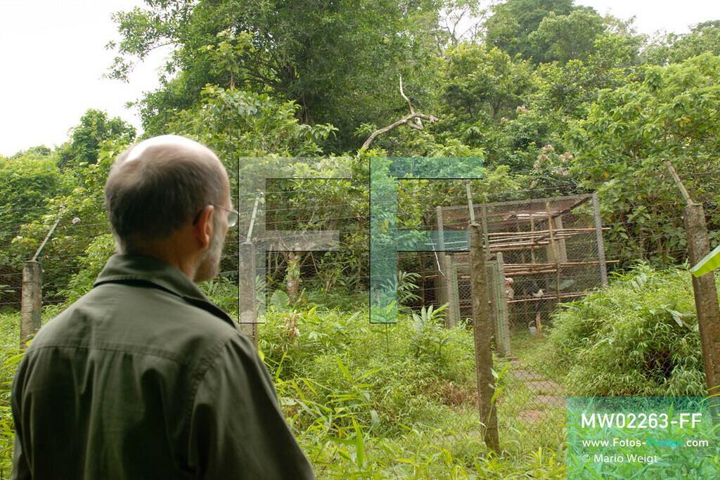 MW02263-FF   Vietnam   Provinz Ninh Binh   Reportage: Endangered Primate Rescue Center   Der Deutsche Tilo Nadler leitet das Rettungszentrum für gefährdete Primaten im Cuc-Phuong-Nationalpark. Hier beobachtet er die Affen in der Semi-Anlage.   ** Feindaten bitte anfragen bei Mario Weigt Photography, info@asia-stories.com **