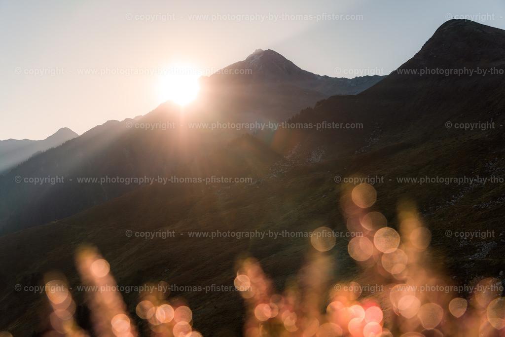 Ahorn Sonnenaufgang Spätsommer-25
