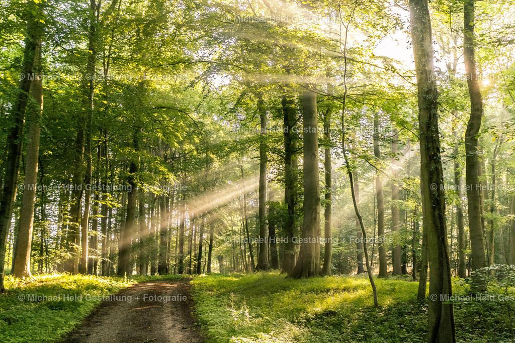 06 Juni | Morgenstimmung im Wald | Morgensonne im Wald bei Hütten
