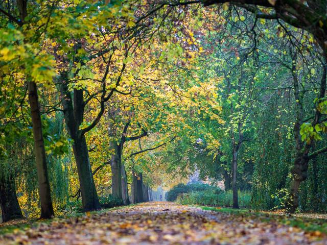 Celle 23.10.2020 (4) | Celle und Umgebung