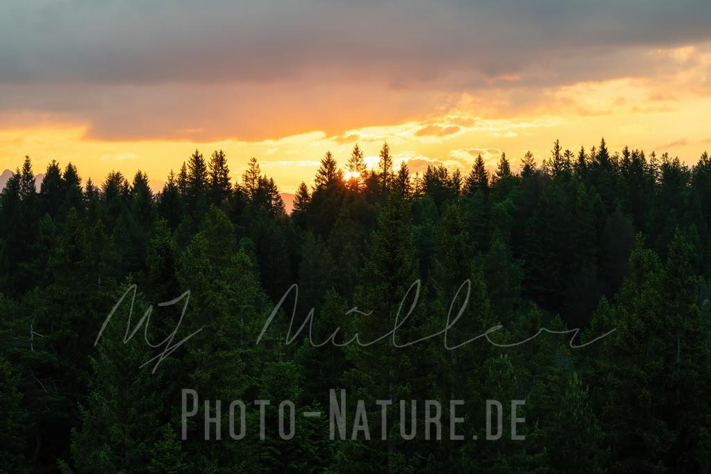 Die Sonne verschwindet im Wald | Prächtige Farben schmücken den Himmel bevor die Sonne hinter dem Wald verschwindet
