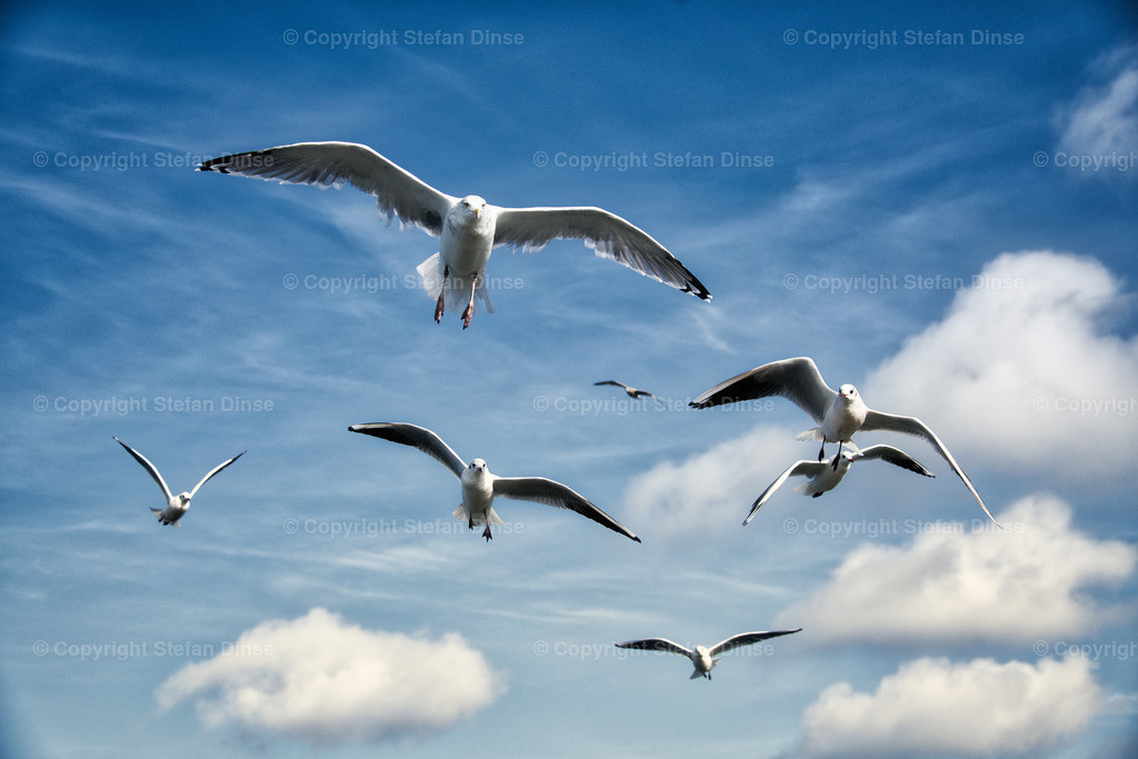a flock of seagulls in blue sky with some clouds | a flock of seagulls in blue sky with some clouds