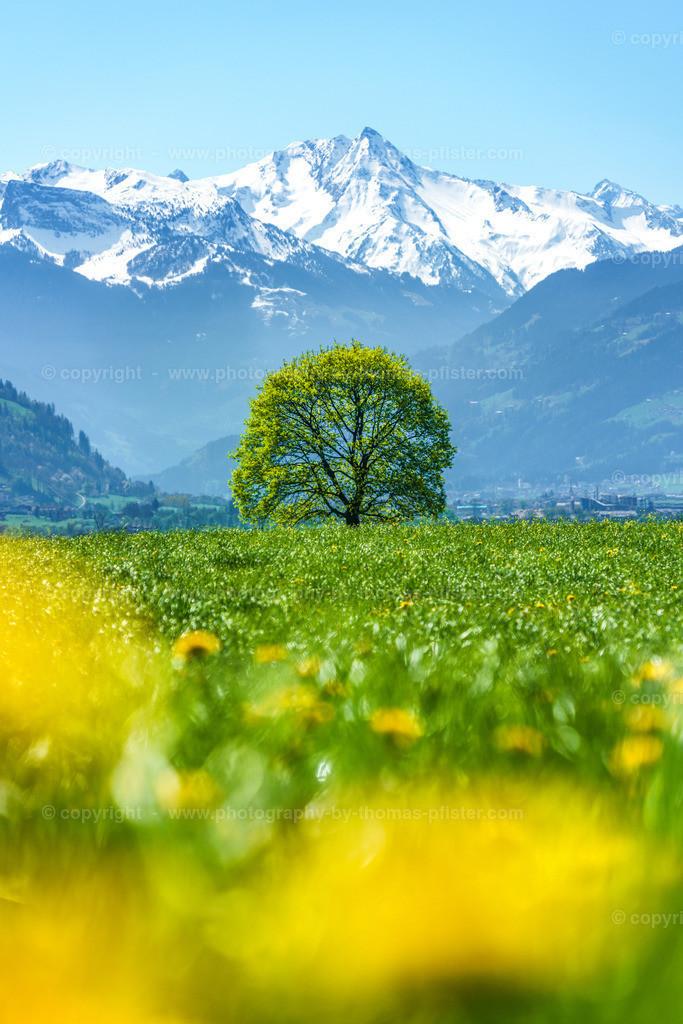 Frühling in Bruck im Zillertal-2
