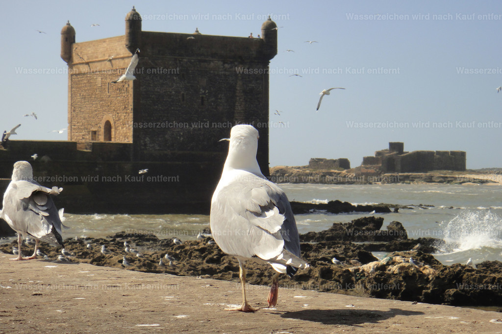Essaouira   Essaouira - Marokko