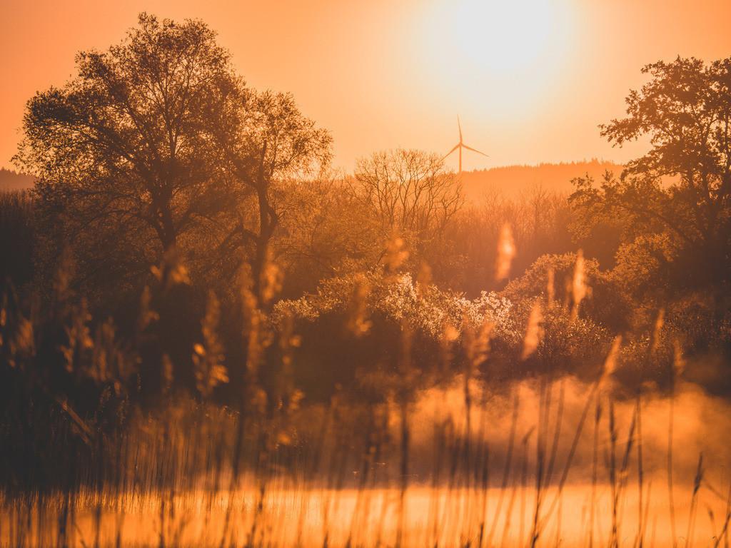 Morgenstimmung im Ried | Sonnenaufgang im Ried bei Schwanau