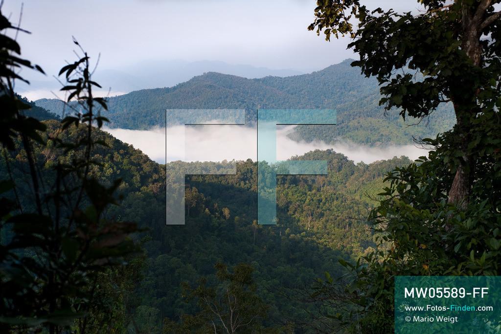 MW05589-FF | Laos | Provinz Sayaboury | Reportage: Arbeitselefanten in Laos | Durch die Abholzung der Wälder schrumpft das natürliche Habitat der Asiatischen Elefanten von Jahr zu Jahr. Lane Xang -