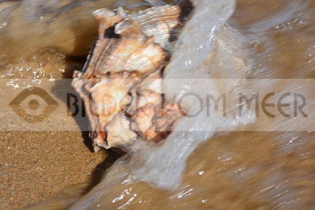 Muschel Bilder am Meer | Muschelbilder am Strand